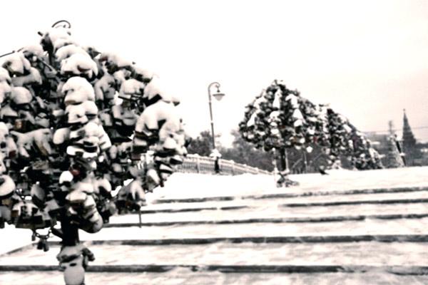 arbres-amoureux